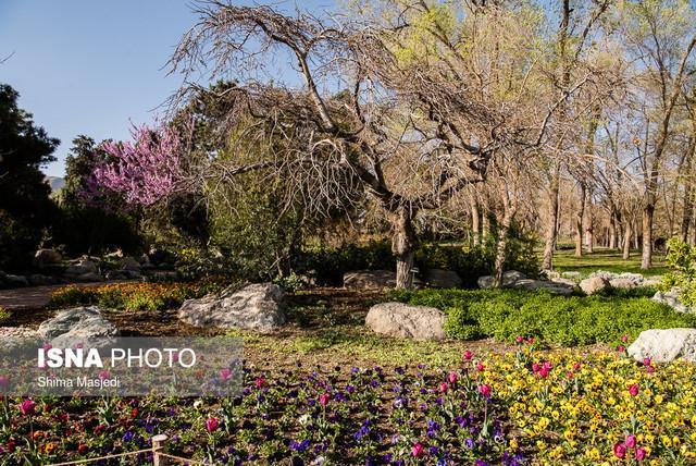 برگزاری سومین جشنواره گل های داوودی در باغ گیاه شناسی