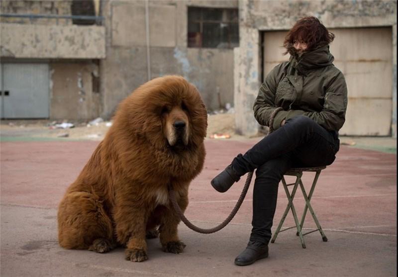 سگ های چند میلیون دلاری